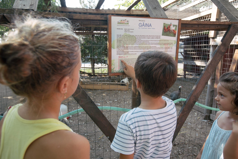 Grup de copii citind informații despre animale