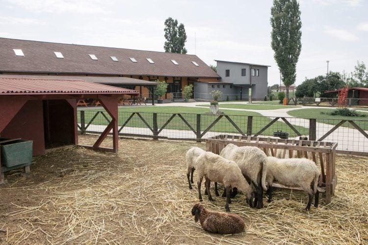 Țarc cu oi