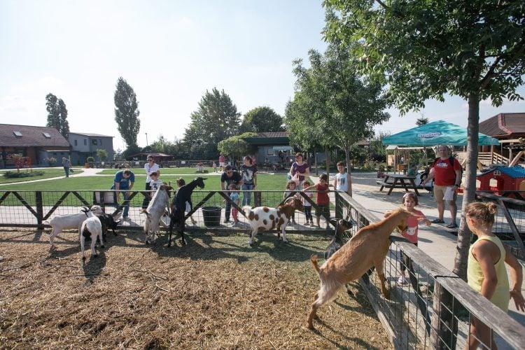 Țarc cu capre și mulți copii