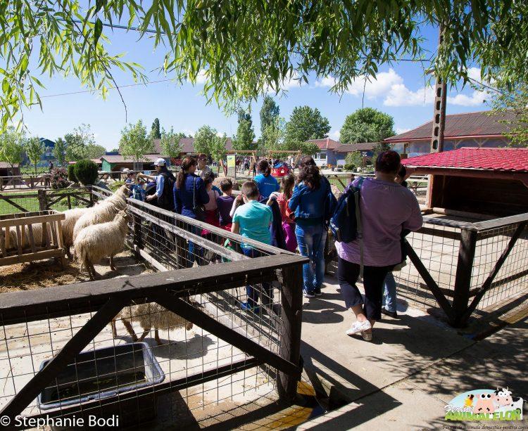 Grup de vizitatori lângă țarcul căprițelor