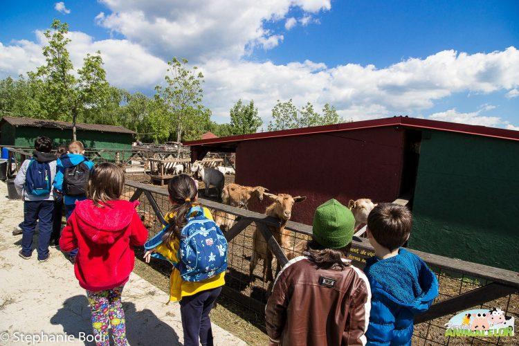 Grup de copii lângă capre