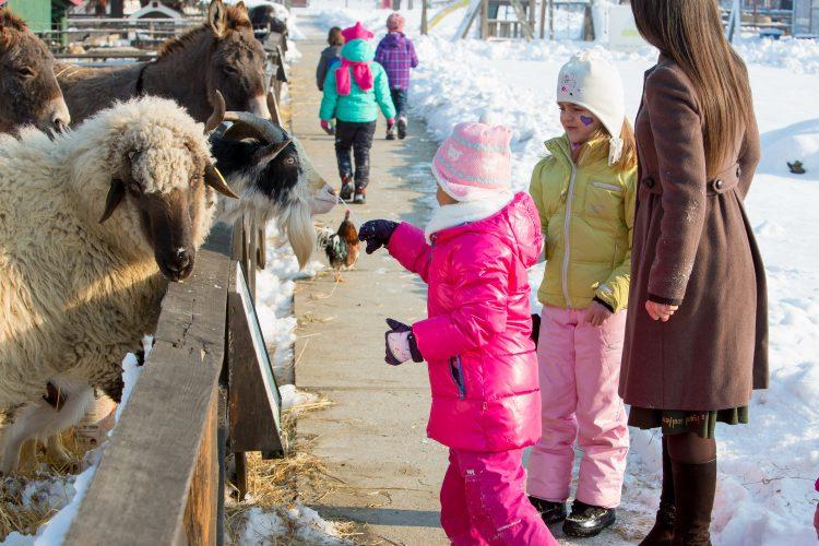Oaie, capră, măgar și copii