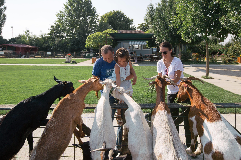 Familie care hrănește capre