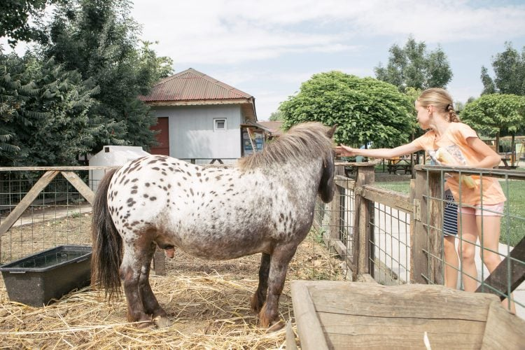Condiții de îngrijire a căilor de iarnă și ponei