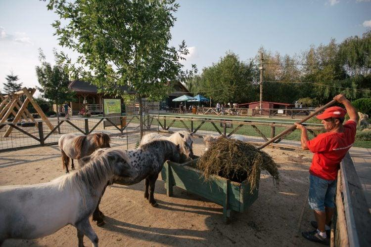 Hrănitul cu fân al poneilor