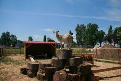 Locul de acrobații al caprelor