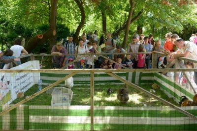 Mulțime care admiră animalele în Cișmigiu