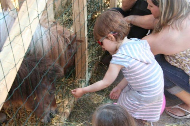 Fetiță hrănind poneiul