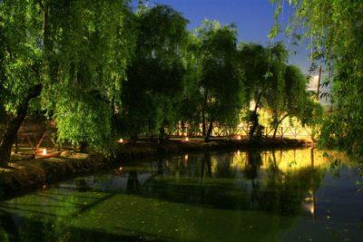 Sălciile și lacul noaptea