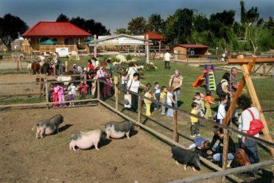 Grupuri în vizită la fermă