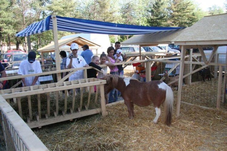 Poneii de la fermă in vizită la Baby Expo
