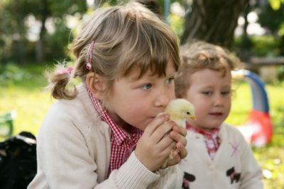 Fetițele iubesc puiul de găină